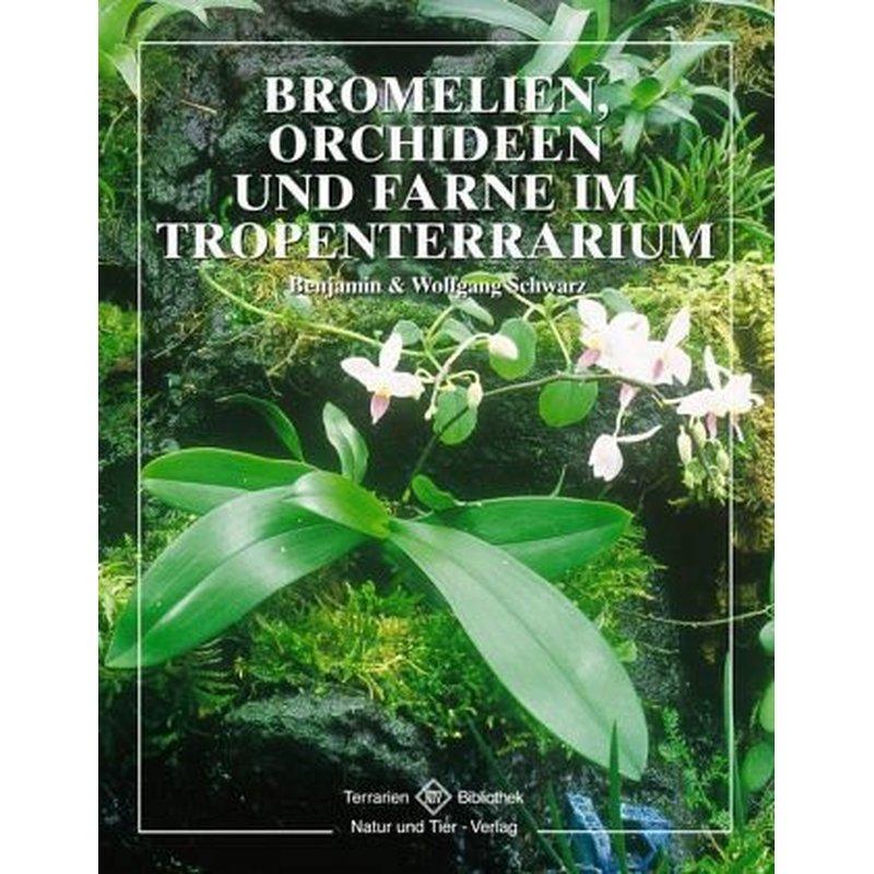 bromelien orchideen und farne im tropenterrarium 19 80. Black Bedroom Furniture Sets. Home Design Ideas